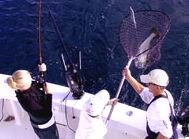 Reel Action Sport Fishing Charters specializes in charter fishing trips in Door County Wisconsin for salmon, trout, smallmouth bass, musky and walleye.